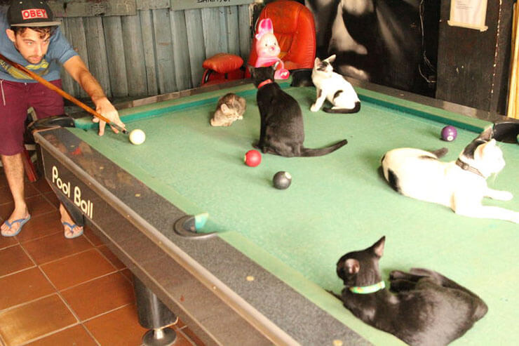 pool table with cats