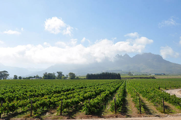 wine tourism premier luxury holiday south africa