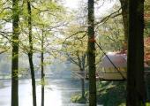beautiful landscape tent eco trees