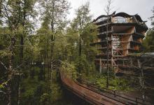huilo huilo rainforest treehouse hotel Nothofagus