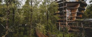 huilo huilo rainforest treehouse hotel Nothofagus
